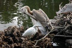 2 uccelli fotografie stock