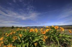 2 vildblommar för columbia klyftaflod Fotografering för Bildbyråer
