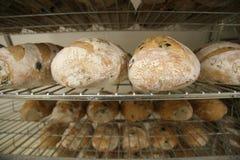 2 vresiga rullar för bröd Arkivbilder
