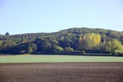 2 wczesny krajobrazowy ranek Obrazy Royalty Free