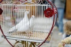 2 wedding голубя как символ влюбленности Стоковое Изображение RF