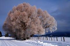 2 wiejskiej sceny zimowe Obraz Stock