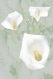 2 wild lillies Arkivbild