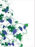 2 winogron cdr ilustracja Obrazy Stock