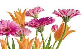 2 wiosny ogrodowa Obraz Royalty Free