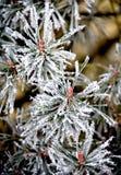 2 wzorów zima Zdjęcia Royalty Free