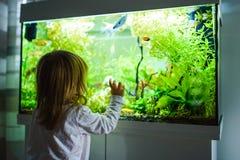 Free 2 Year Old Child Indoors Watching Fish Swiming In Big Fish Tank, Aquarium Stock Photo - 170861850