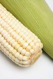 2 zamkniętej kolby kukurydzy. Fotografia Royalty Free