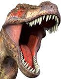 2 zamknięty tyrannosaurus Fotografia Stock