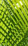 2 zieleni Zdjęcie Royalty Free