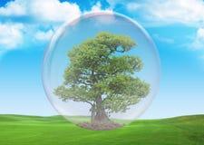 2 zielony życie Zdjęcie Royalty Free