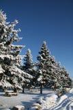 2 zimy park fotografia royalty free