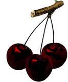 20世纪50年代樱桃葡萄酒 免版税库存图片