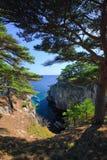 20个海岸线结构树 免版税库存图片
