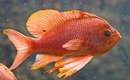 20条水族馆鱼 图库摄影