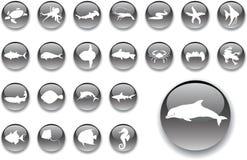 20 stora knappar fiskar seten Royaltyfria Foton