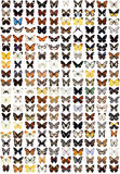 200 different butterflies. Big collection Royalty Free Stock Images