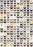 200 different butterflies vector illustration