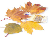200 euro con le foglie Immagini Stock