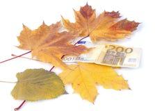 200 Euros mit Blättern Stockbilder