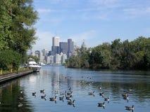 2004 gąsek jezioro Toronto Obrazy Stock