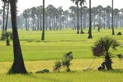 2005 batheay柬埔寨srok 免版税库存图片