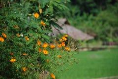 2007威严的chiangmai乡下泰国 库存图片