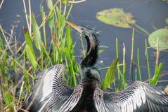 2007年鸟佛罗里达1月担心 库存照片