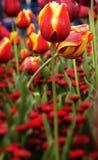 2009 Καμπέρρα floriade Στοκ Φωτογραφίες