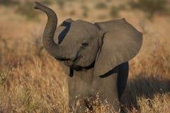 2009年婴孩被采取的大象照片 免版税库存照片