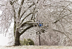 2009 ice storm. Tree covered in ice from 2009 ice storm in southern Kentucky Royalty Free Stock Image