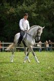 2010年比利时horsefair 库存照片