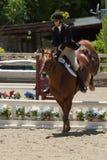 2010 6 de junio, demostración abierta del caballo, Portola Valley, CA Foto de archivo
