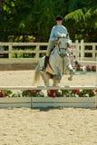 2010 6 de junio, demostración abierta del caballo, Portola Valley, CA Fotografía de archivo libre de regalías