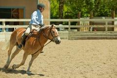 2010 6 de junio, demostración abierta del caballo, Portola Valley, CA Imágenes de archivo libres de regalías