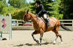2010 6 juin, exposition ouverte de cheval, Portola Valley, CA Photos libres de droits