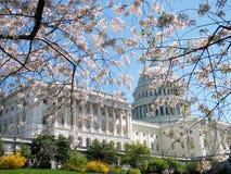 2010 blomningar som nära bygger capitolCherryet Royaltyfri Bild