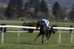 2011 участвовать в гонке prague лошади Стоковое фото RF