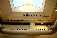 2011 cattelan installation maurizio andra Royaltyfria Bilder