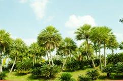 2011 chiangmai flor palmowy królewski przedstawienie Zdjęcie Stock