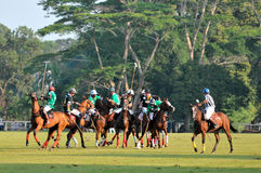 2011 FIP POLO WORLD CUP royalty free stock images