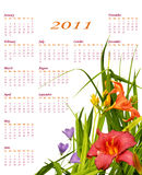 2011 Floral calendar. With beautiful red and orange lilies in the corner, simple and elegant Stock Photos