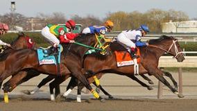 2011 Wood Memorial Stakes Stock Image