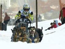2012个狗mushers pirena雪橇 免版税图库摄影