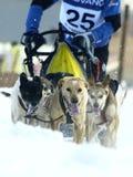 2012个狗mushers pirena雪橇 免版税库存图片