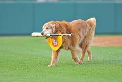 2012年棒球联盟未成年人 免版税图库摄影