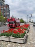 2012辆公共汽车节日渥太华浏览郁金香 库存图片