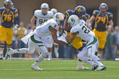 2012 NCAA voetbal - Baylor @ WVU Royalty-vrije Stock Foto