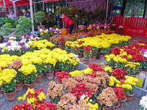 2012 Spring Festival Flower Market in Nanhai Stock Photography