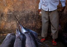 2013_03_16_Somalia_Fishing n Stock Image